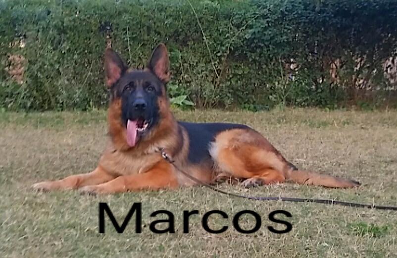 Marcos vom Kufri Berg